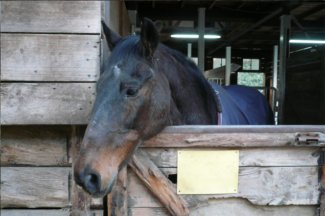 優しい表情の馬