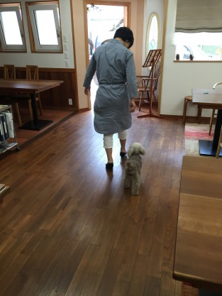 くっついて歩く犬