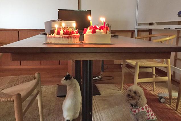 チビとココが誕生会に参加